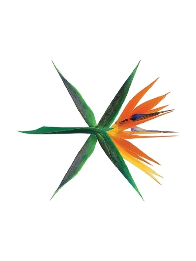 how to write exo in korean